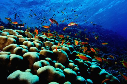 Barbados Blue.jpg