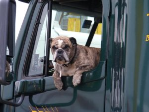 Dog in RV. Pet travel