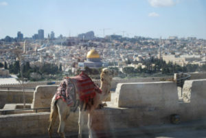 A camel overlooks Mount Scopus in Israel. Photo by Tonya Fitzpatrick