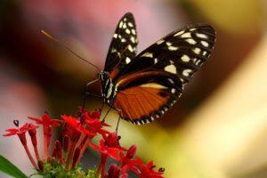 Butterfly in botanical garden