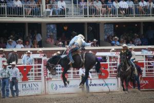 Rodeo.  Photo:  Tonya Fitzpatrick