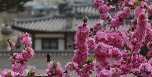 Changdeok Palace.
