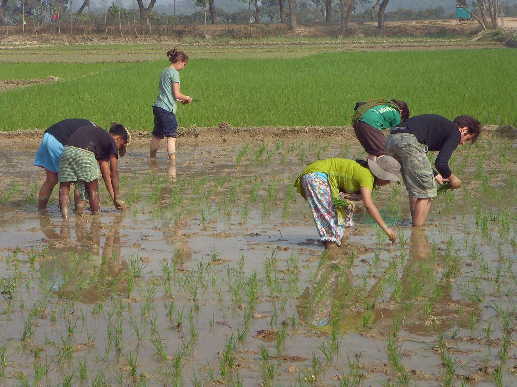 Volunteers in field.jpg