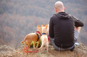 man and dogs.travel.jpg