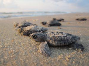sea-turtles-.jpg