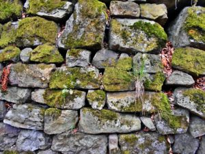 A stone wall covered in moss