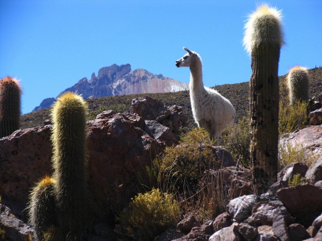 Bolivia.flame-.jpg