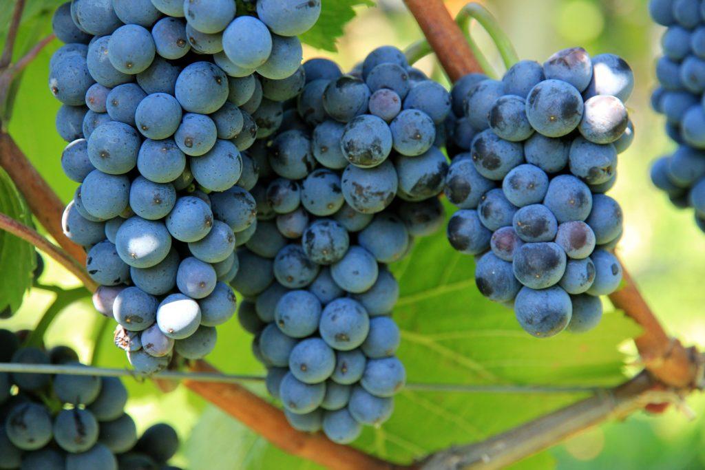 grapes-.jpg