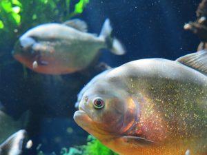 aquarium-monaco