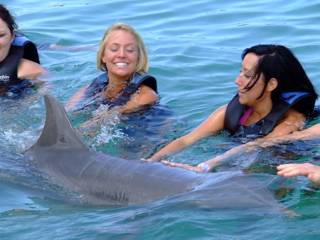 Swimming with Dolphins.