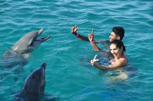 Dolphins with swimmers