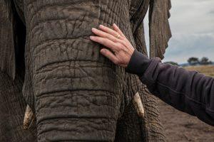 elephant-volunteer