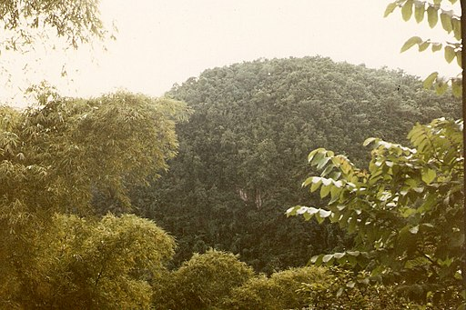 Cockpit Country is Jamaica's largest remaining contiguous rainforest--Cockpit Country