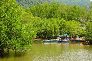 Mangrove forest in Thailand.