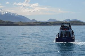 Dolphin Encounter cruise, Kaikoura NZ. Photo by Brent Cahill