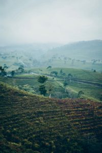 Borneo plantation