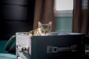 Pet travel - cat