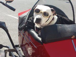 Pet travel dog