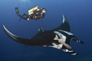 Andrea full face mask with giant manta