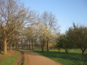 A trail along the Parc de Lacroix-Laval.