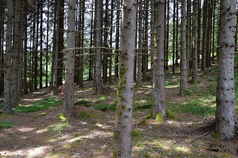 Serres Forest. Photo courtesy of WikiMedia/Sapin88