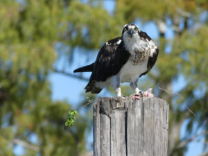 An osprey helped guide the water way. Photo: Kathleen Walls