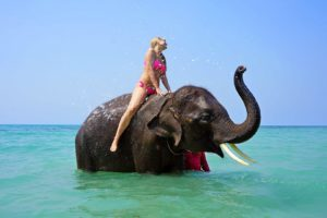 An example of unethical animal tourism. Riding an elephant in Thailand.