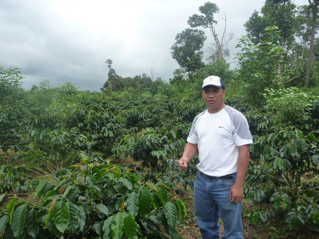 Coffee plantation in Laos. Photo: MTC Group