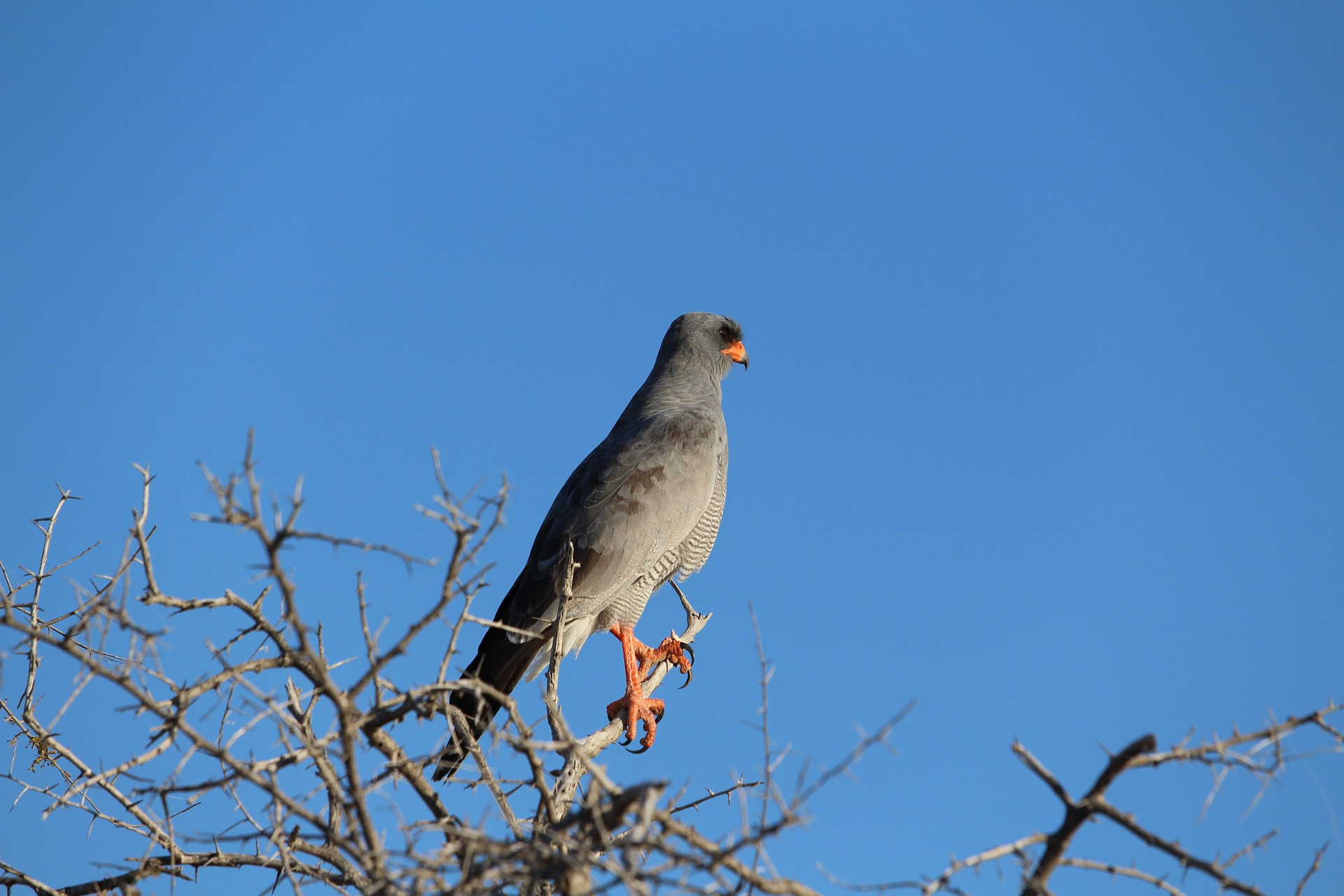 Raptor and other predatory birds can be found in Etosha National Park.