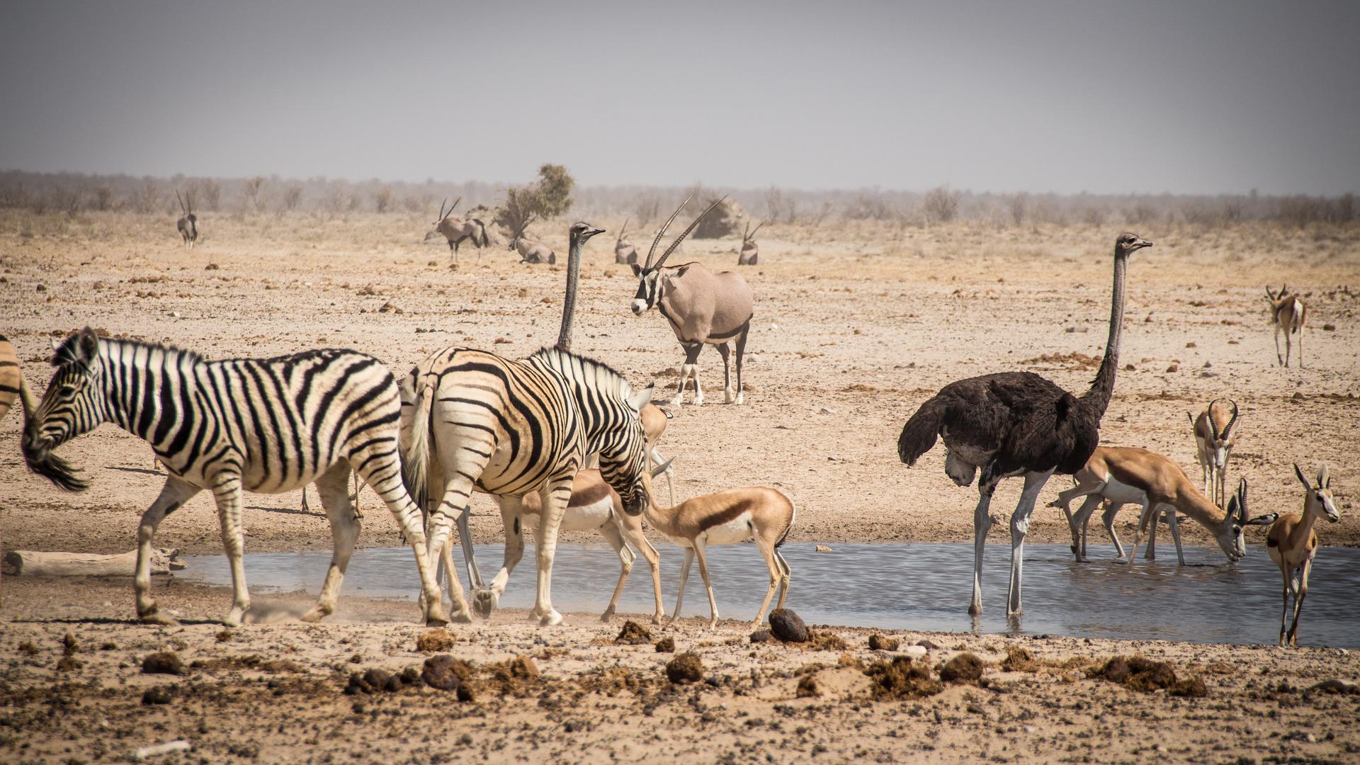 Wildlife gather at a waterhole in Etosha National Park.