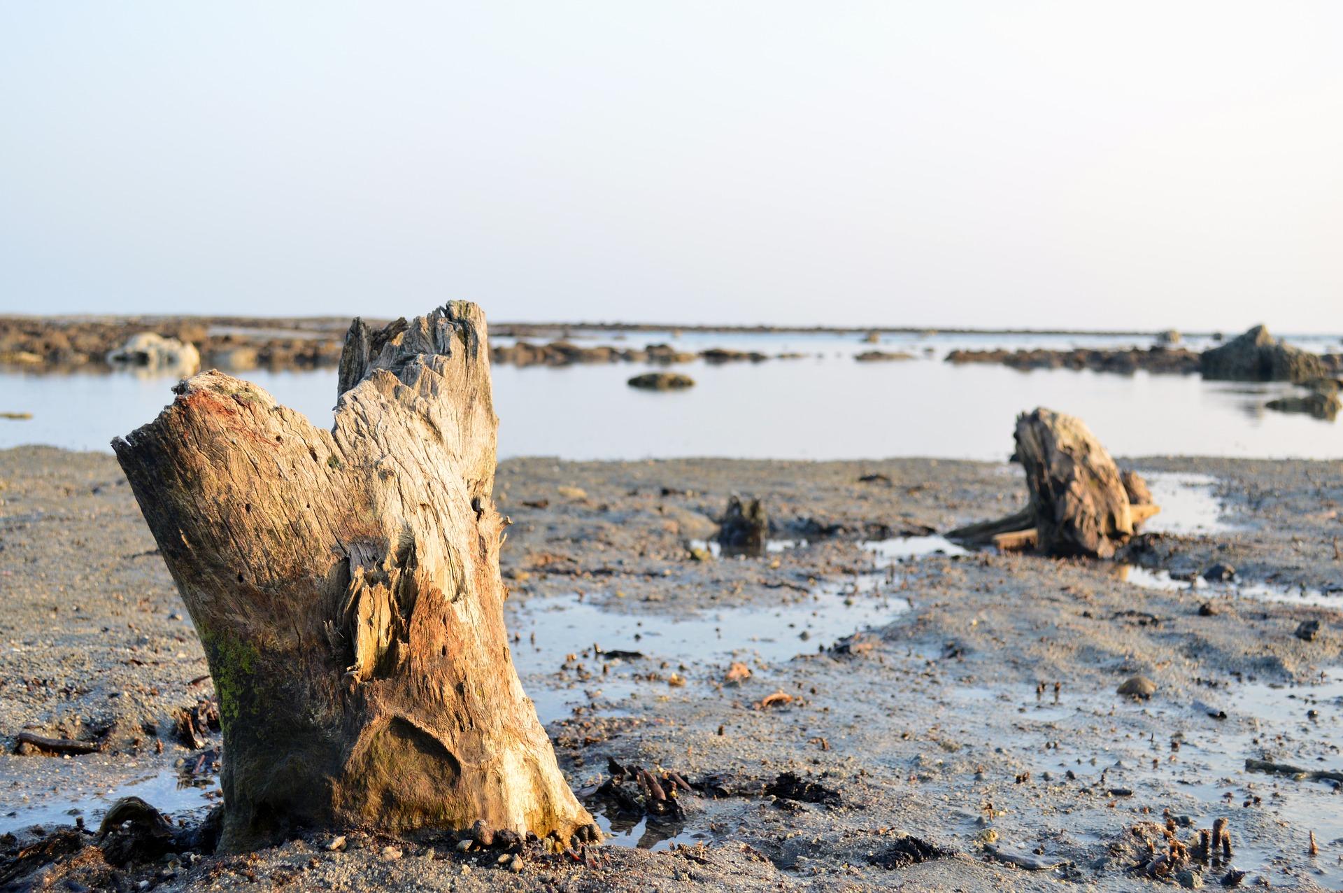Uprooted trees on a Sint Maarten (Saint Martin0 beach.