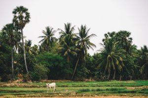 Choeung Ek - a Killing Field in Cambodia