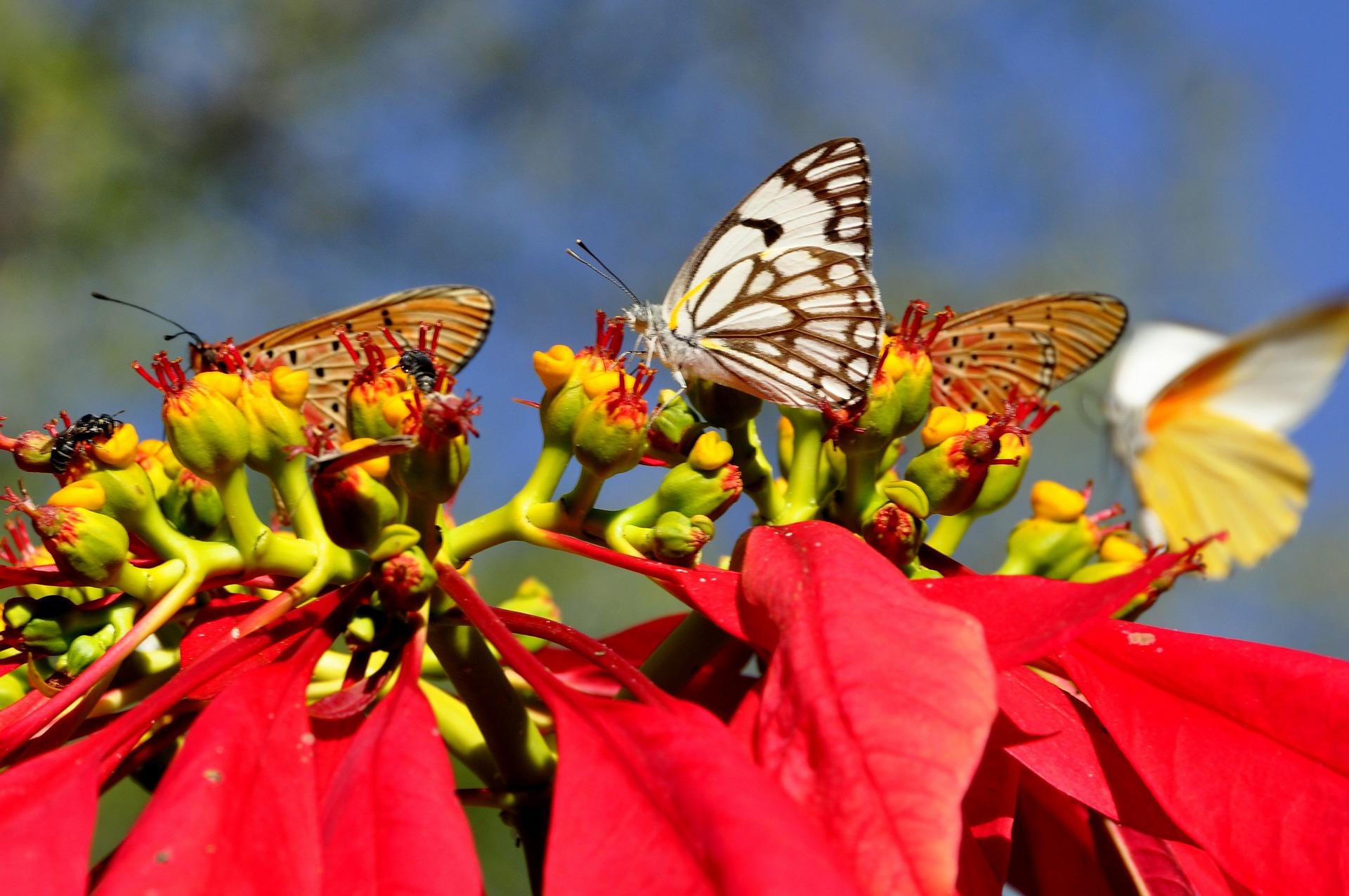 Butterflies on fauna in Zimbabwe.