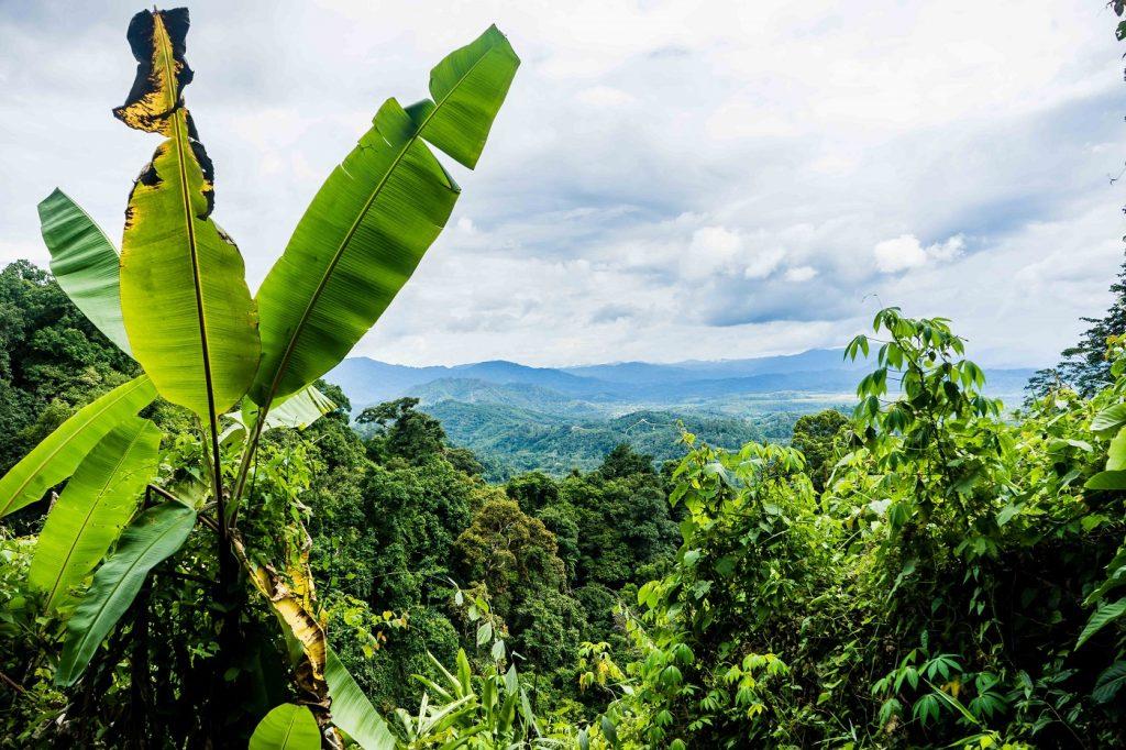 Kinabalu National Park. Photo: Ziba Redif