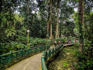 Kinabalu National Park walking trail. Photo: Ziba Redif