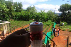 Strawberry Farm photo by Tania Banerjee