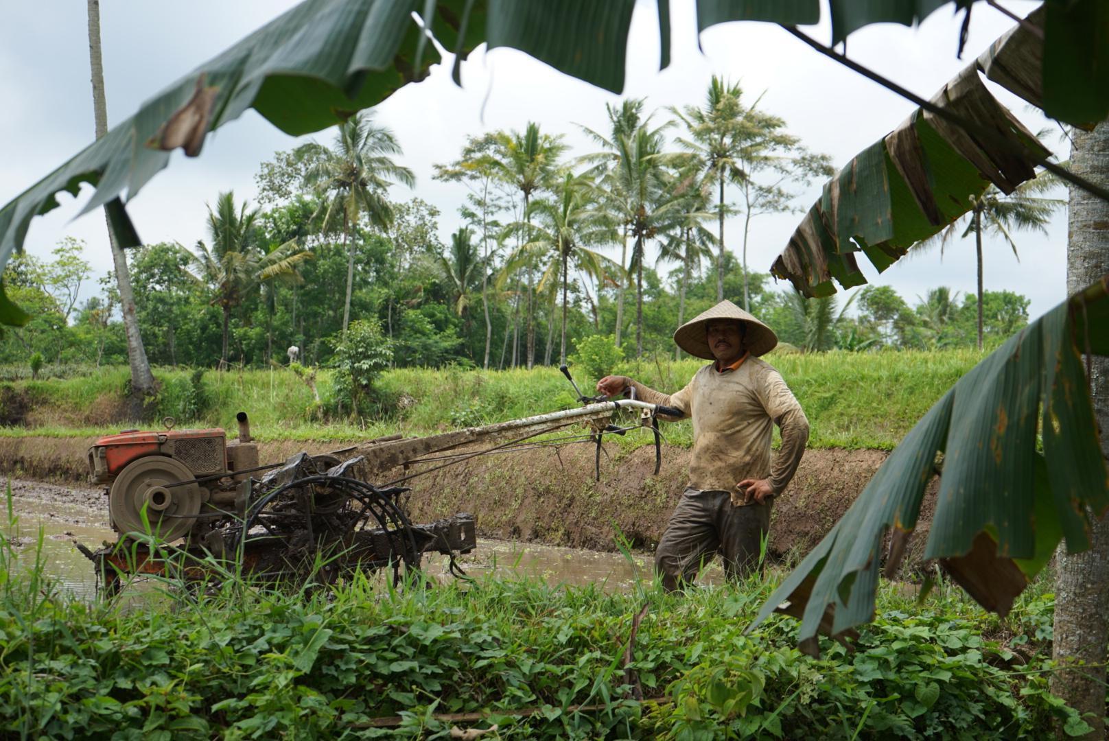 Licin Farmer