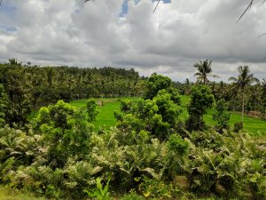 Licin, East Java. Photo: Ziba Redif