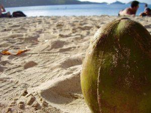 Coconut on a lazy beach