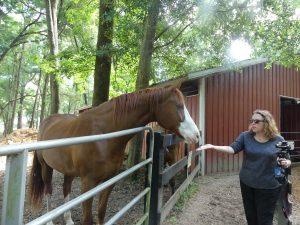 A guest feeding horses at The Canyons. Photo: Kathleen Walls