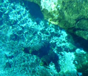 Statues underwater taken from the glass-bottom boat. Photo: Kathleen Walls