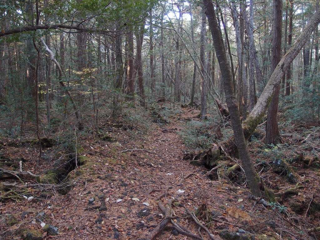 Photo of the Aokigahara suicide forest courtesy of Creative Commons.