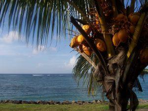 Palm tree on Caribbean Island