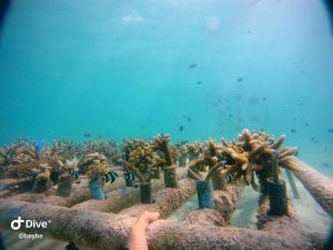 Coral Reef project photo courtesy of Beybe.