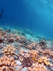 Photo courtesy of Coral Doctors