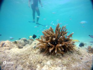 Snorkeling to check reefs