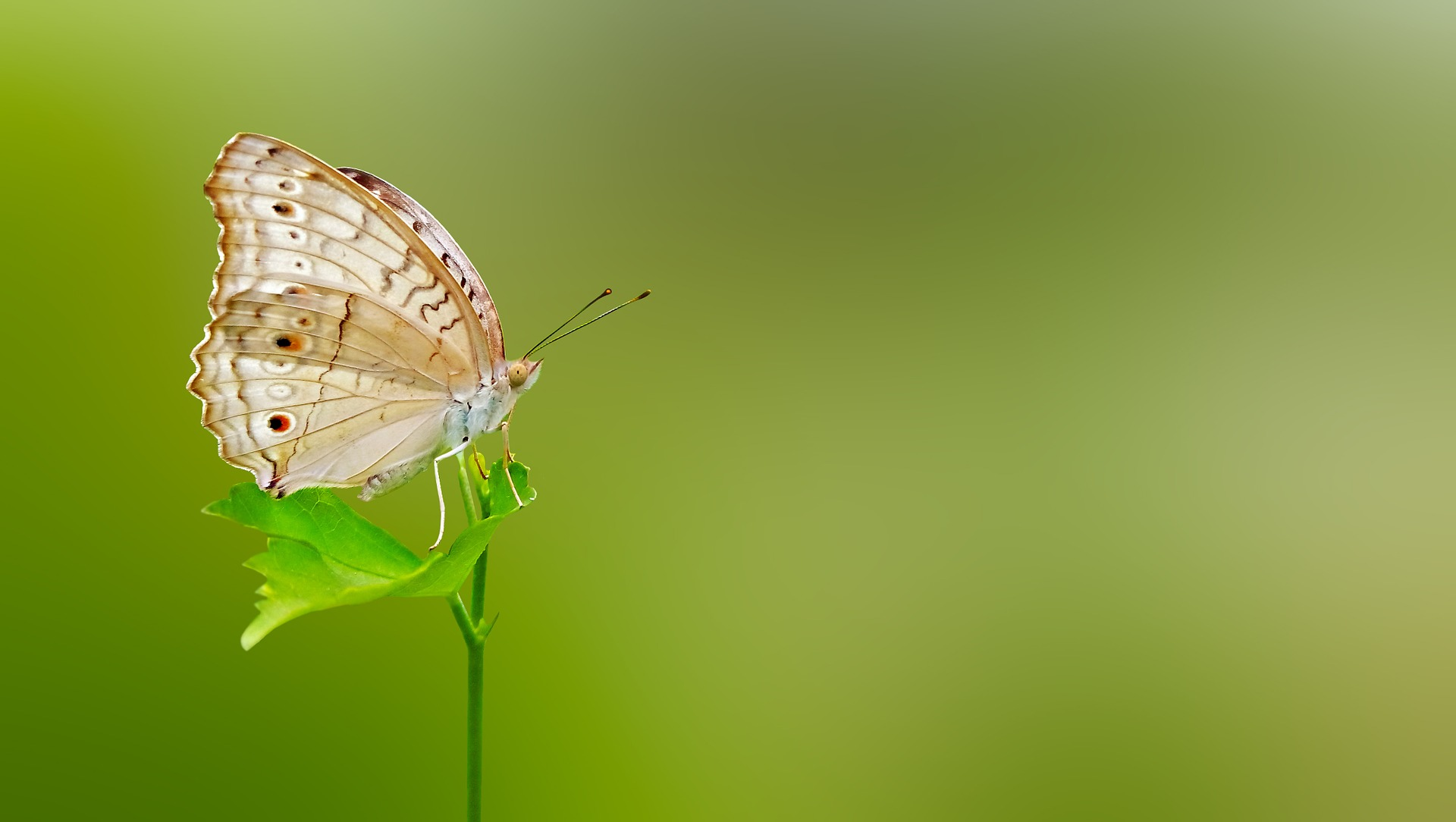 Butterfly on leaf is a symbol of a sustainable planet.
