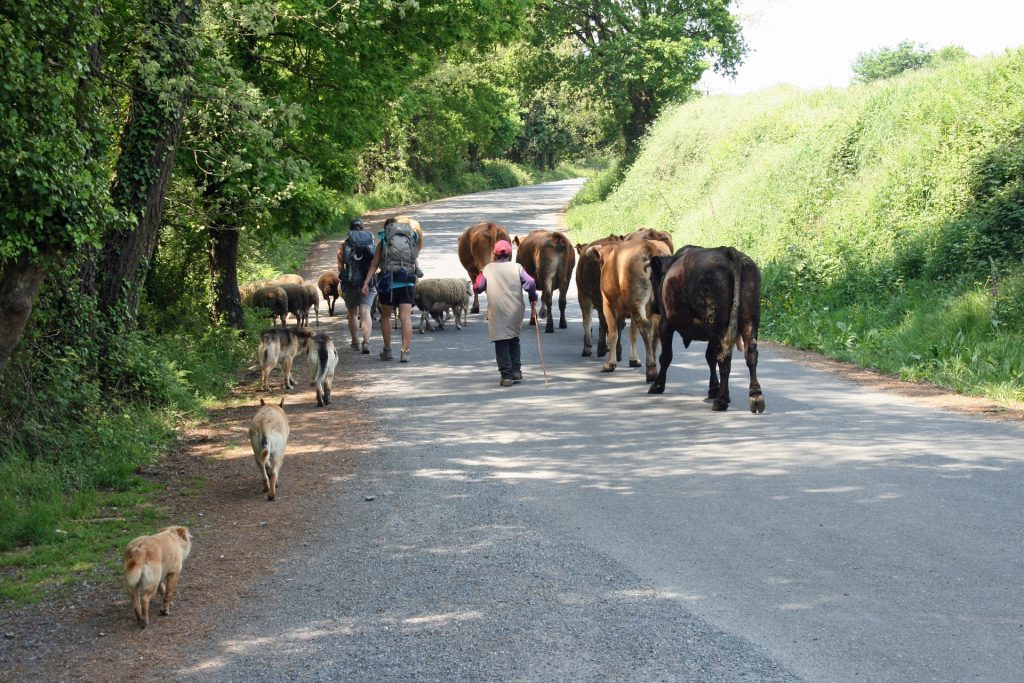 The Camino takes you over different roads and terrains. You never know who you'll meet.