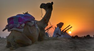 Desert of Rajasthan with camel at sunset.