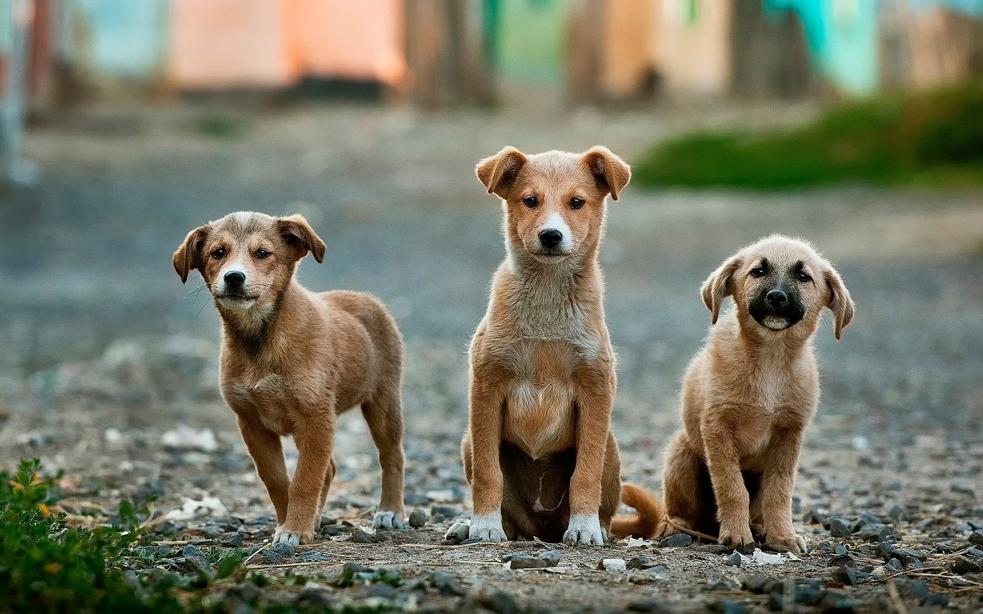 Feral dogs can carry rabies